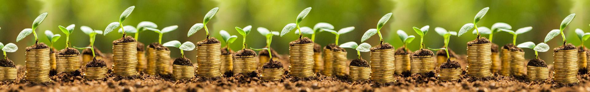 Financial Empowerment